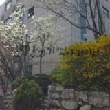 20160410_서초동_집앞꽃.jpg