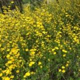 화담숲 봄꽃들~