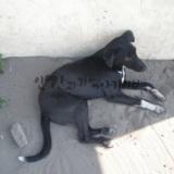 Monggu의 project office에서 키우던 강아지 물리샤니
